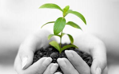 growth plant n2